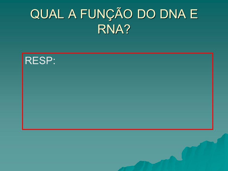 QUAL A FUNÇÃO DO DNA E RNA? RESP: