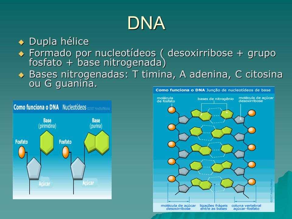 DNA Dupla hélice Dupla hélice Formado por nucleotídeos ( desoxirribose + grupo fosfato + base nitrogenada) Formado por nucleotídeos ( desoxirribose + grupo fosfato + base nitrogenada) Bases nitrogenadas: T timina, A adenina, C citosina ou G guanina.