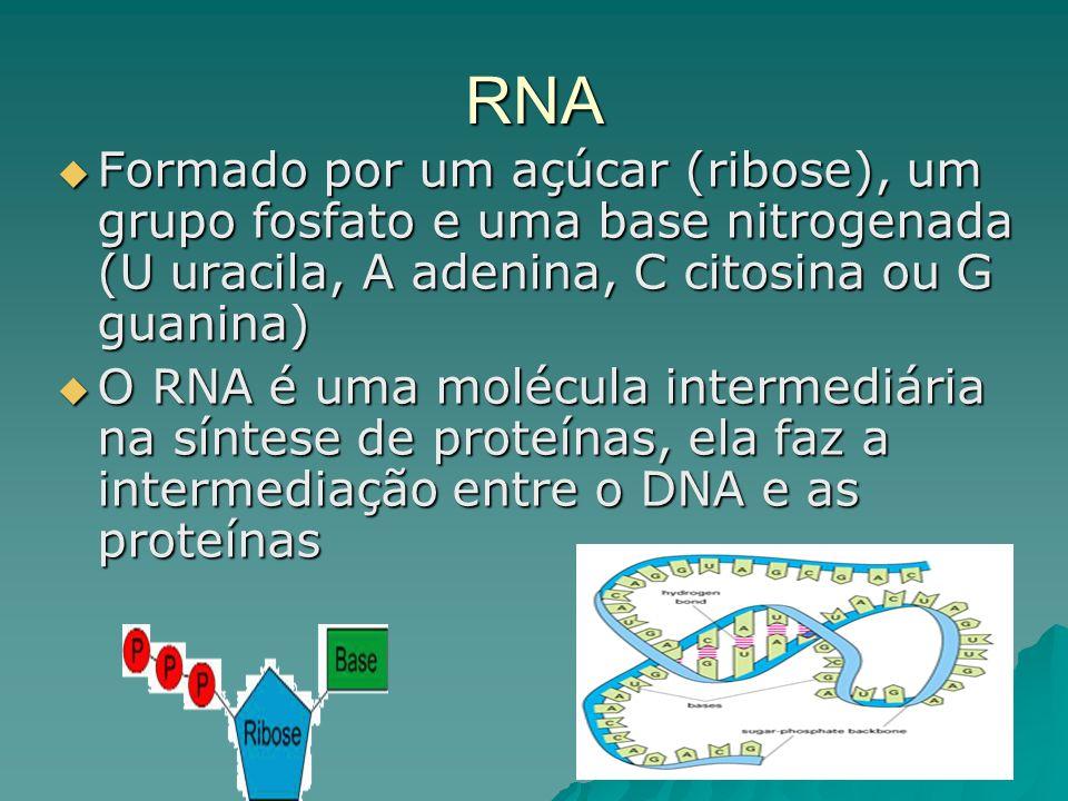RNA Formado por um açúcar (ribose), um grupo fosfato e uma base nitrogenada (U uracila, A adenina, C citosina ou G guanina) Formado por um açúcar (ribose), um grupo fosfato e uma base nitrogenada (U uracila, A adenina, C citosina ou G guanina) O RNA é uma molécula intermediária na síntese de proteínas, ela faz a intermediação entre o DNA e as proteínas O RNA é uma molécula intermediária na síntese de proteínas, ela faz a intermediação entre o DNA e as proteínas