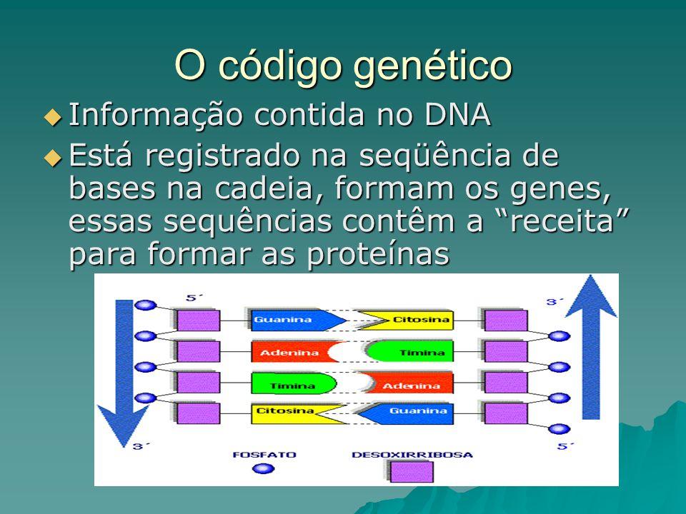 O código genético Informação contida no DNA Informação contida no DNA Está registrado na seqüência de bases na cadeia, formam os genes, essas sequências contêm a receita para formar as proteínas Está registrado na seqüência de bases na cadeia, formam os genes, essas sequências contêm a receita para formar as proteínas