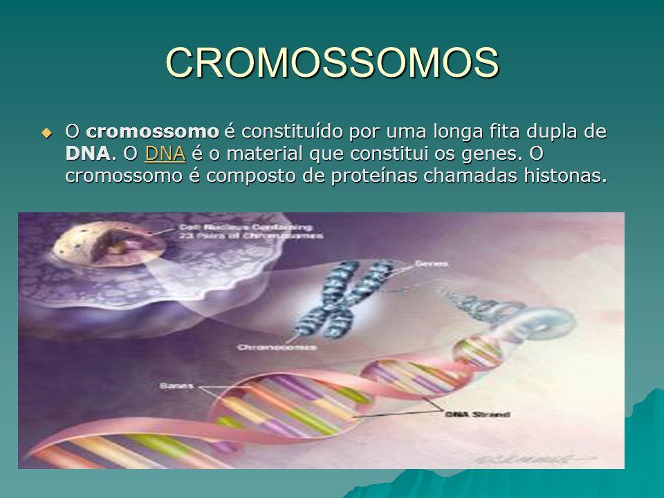 CROMOSSOMOS O cromossomo é constituído por uma longa fita dupla de DNA.