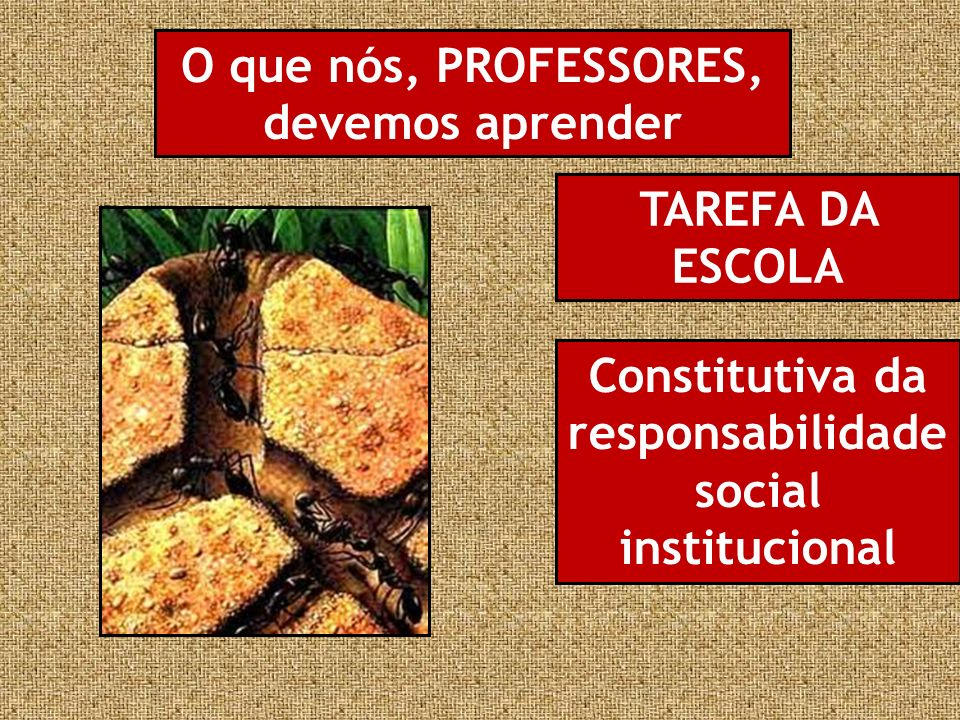O que nós, PROFESSORES, devemos aprender TAREFA DA ESCOLA Constitutiva da responsabilidade social institucional