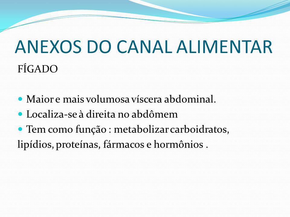 ANEXOS DO CANAL ALIMENTAR FÍGADO Maior e mais volumosa víscera abdominal. Localiza-se à direita no abdômem Tem como função : metabolizar carboidratos,