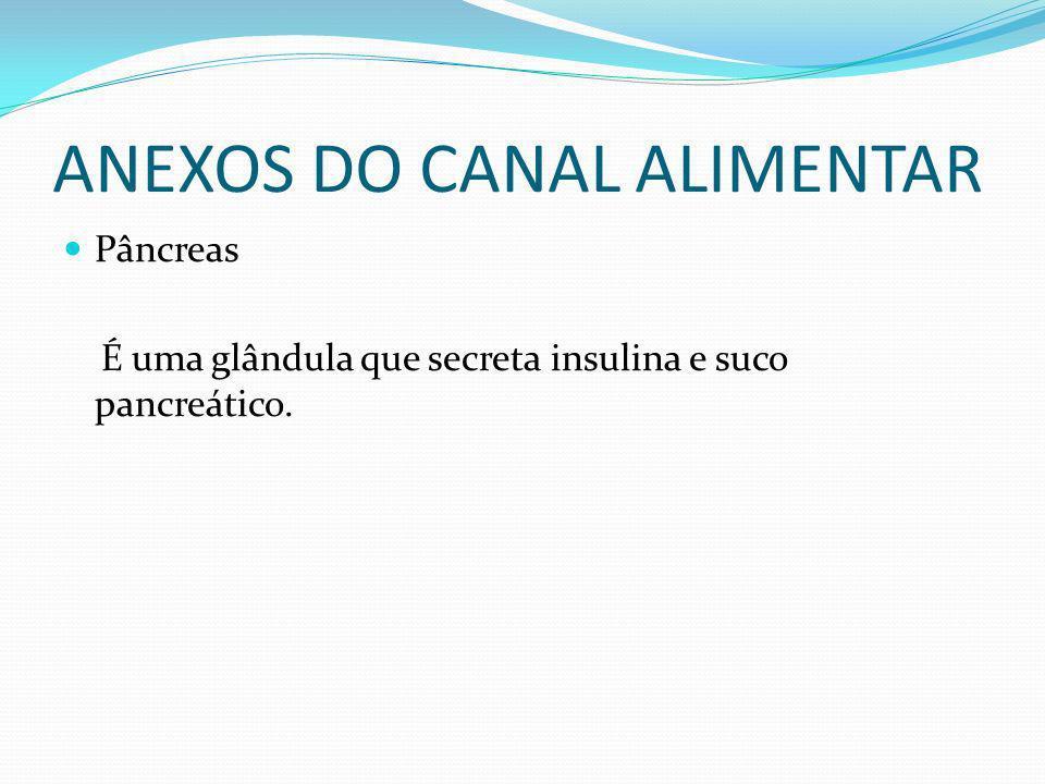 ANEXOS DO CANAL ALIMENTAR Pâncreas É uma glândula que secreta insulina e suco pancreático.
