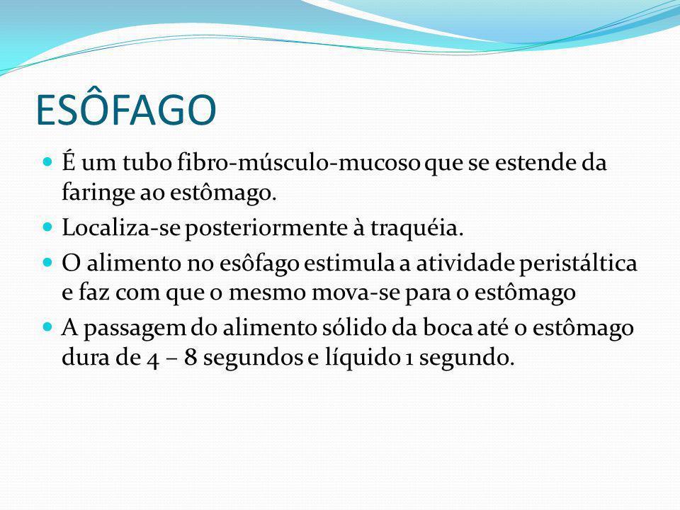 ESÔFAGO É um tubo fibro-músculo-mucoso que se estende da faringe ao estômago. Localiza-se posteriormente à traquéia. O alimento no esôfago estimula a