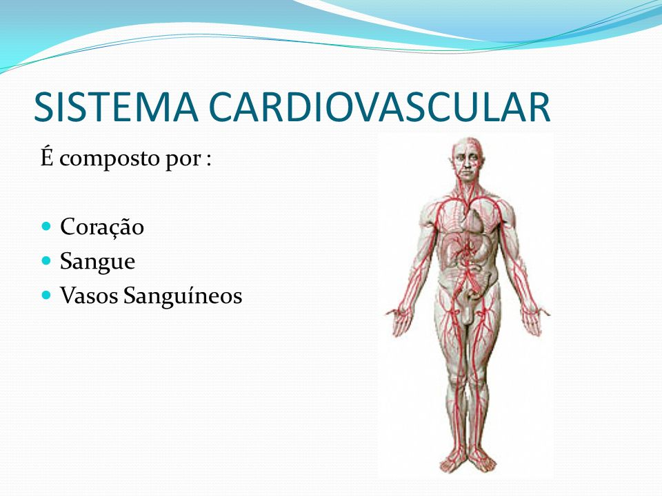 SISTEMA CARDIOVASCULAR É composto por : Coração Sangue Vasos Sanguíneos