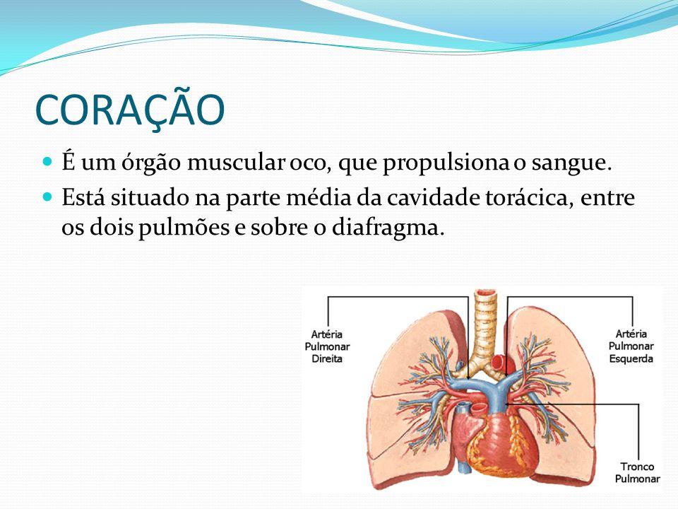 CORAÇÃO É um órgão muscular oco, que propulsiona o sangue. Está situado na parte média da cavidade torácica, entre os dois pulmões e sobre o diafragma