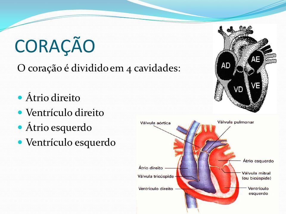 CORAÇÃO O coração é dividido em 4 cavidades: Átrio direito Ventrículo direito Átrio esquerdo Ventrículo esquerdo