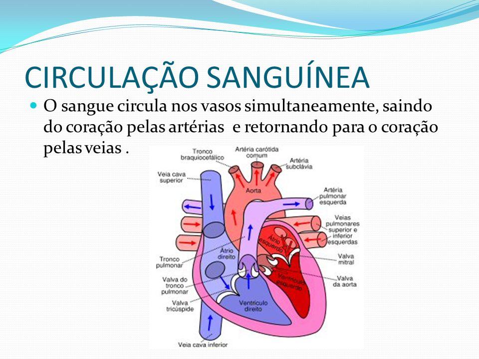 CIRCULAÇÃO SANGUÍNEA O sangue circula nos vasos simultaneamente, saindo do coração pelas artérias e retornando para o coração pelas veias.