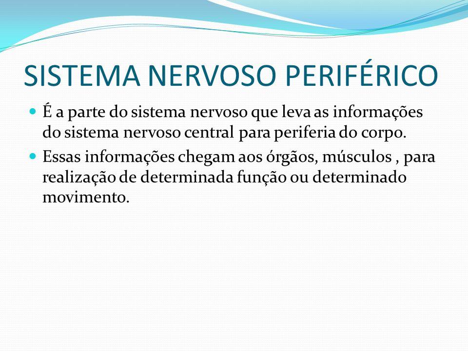 SISTEMA NERVOSO PERIFÉRICO É a parte do sistema nervoso que leva as informações do sistema nervoso central para periferia do corpo. Essas informações