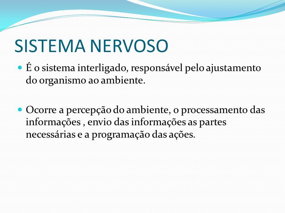 SISTEMA NERVOSO É o sistema interligado, responsável pelo ajustamento do organismo ao ambiente. Ocorre a percepção do ambiente, o processamento das in