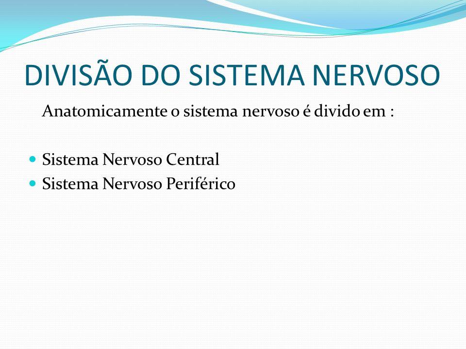 DIVISÃO DO SISTEMA NERVOSO Anatomicamente o sistema nervoso é divido em : Sistema Nervoso Central Sistema Nervoso Periférico