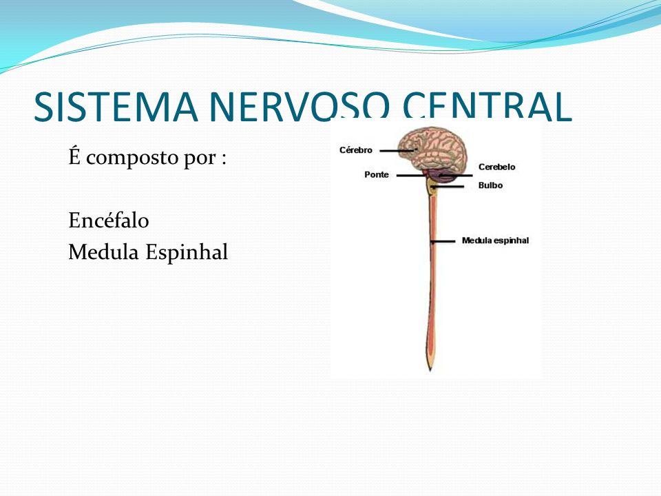 SISTEMA NERVOSO CENTRAL É composto por : Encéfalo Medula Espinhal