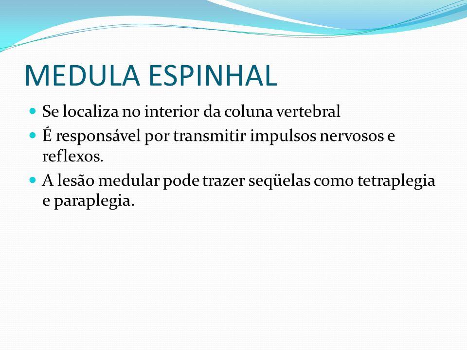 MEDULA ESPINHAL Se localiza no interior da coluna vertebral É responsável por transmitir impulsos nervosos e reflexos. A lesão medular pode trazer seq