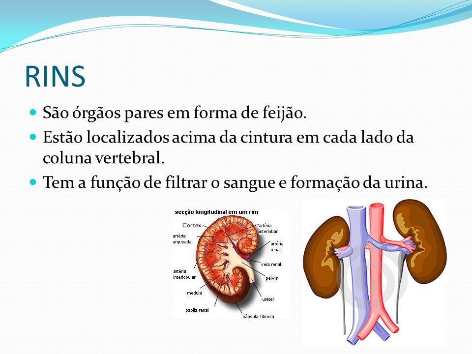 RINS São órgãos pares em forma de feijão. Estão localizados acima da cintura em cada lado da coluna vertebral. Tem a função de filtrar o sangue e form