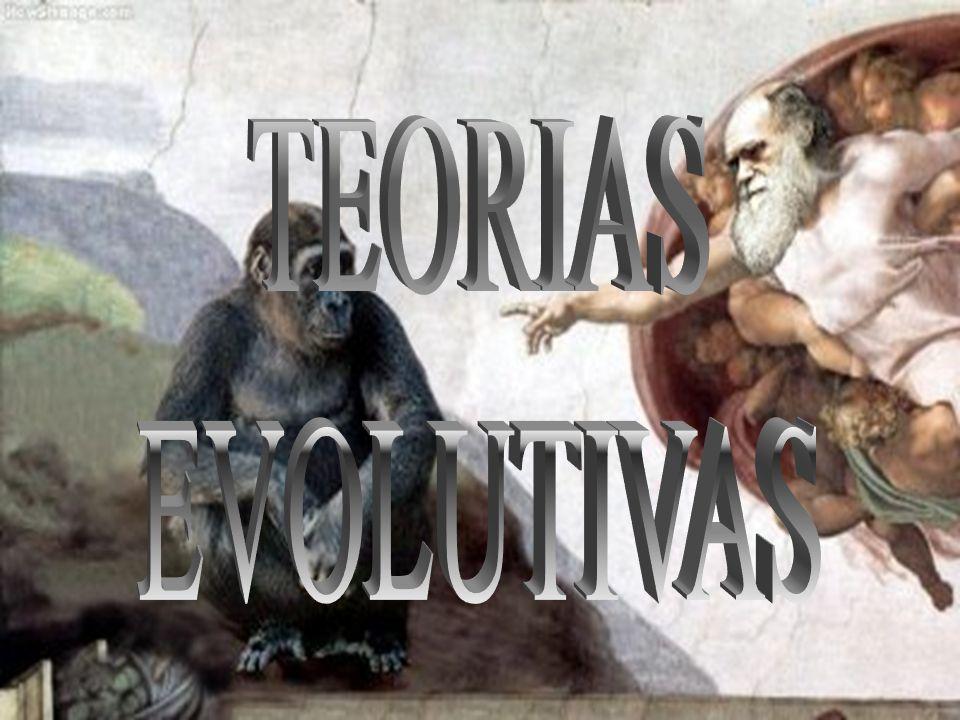 CONCEITO Processo pelo qual os seres vivos se diversificaram ao longo do tempo dando origem às espécies atuais ou já extintas, sendo consequência da adaptação destes ao ambiente onde vivem.