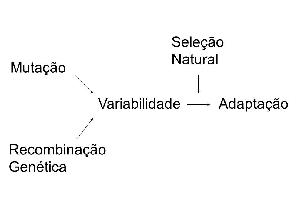EVIDÊNCIAS DA EVOLUÇÃO FÓSSEIS Restos ou vestígios de seres vivos que viveram em outras épocas Permite estabelecer ligações entre diferentes grupos de seres vivos, e sequências no processo evolutivo