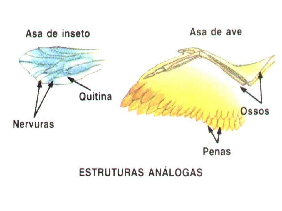 Órgãos vestigiais: órgãos atrofiados e sem função em determinados organismos, mas que correspondem a órgãos desenvolvidos e funcionais em outros organismos Ex: apêndice vermiforme, membrana semilunar