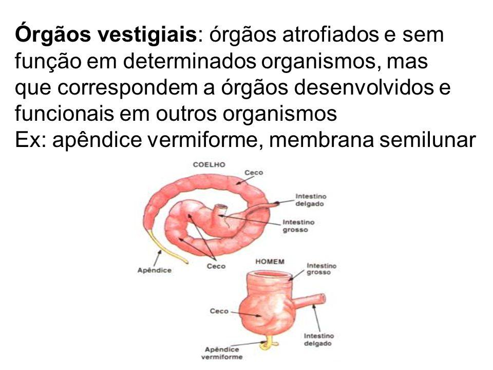 EMBRIOLOGIA COMPARADA Análise comparativa do desenvolvimento embrionário entre espécies diferentes Quanto maior a semelhança entre os estágios de desenvolvimento, maior o grau de parentesco