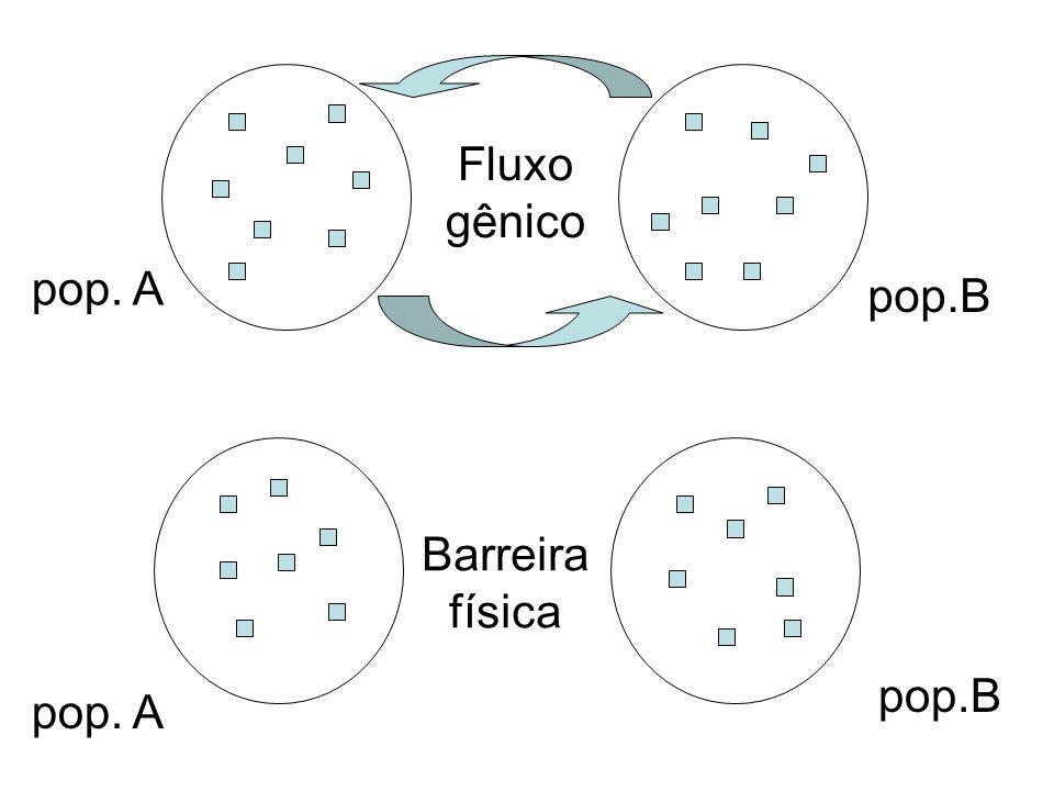 Seleção natural diferenciada Formação de raças (indivíduos com potencial intercruzante) Aumento da diversidade genética Isolamento reprodutivo (indivíduos sem potencial intercruzante) Formação de espécie nova