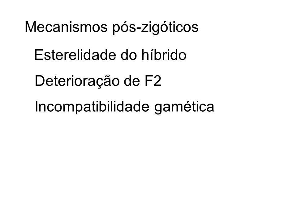 Mecanismos pós-zigóticos Esterelidade do híbrido Deterioração de F2 Incompatibilidade gamética