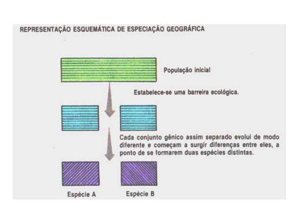Irradiação adaptativa Indivíduos com alto grau de parentesco apresentam aspectos diferentes por explorarem ambientes diferentes Convergência adaptativa Indivíduos com pouco grau de parentesco apresentam aspectos semelhantes por explorarem o mesmo ambiente