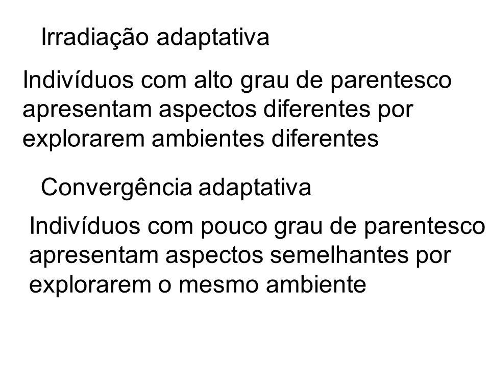 Irradiação adaptativa