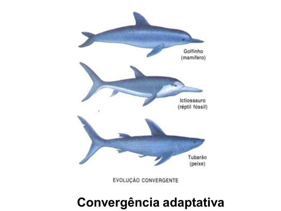 Convergência adaptativa