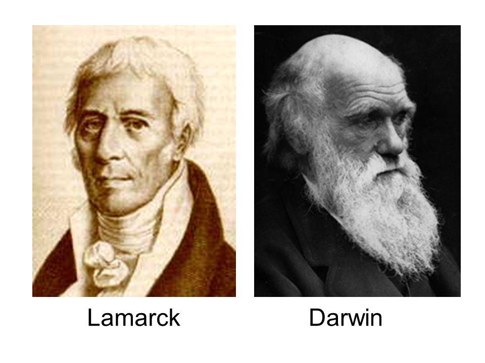 LAMARCKISMO (1809) As mudanças ocorridas no meio trazem a necessidade de adaptação, para isso os indivíduos sofreriam modificações para poderem sobreviverem às novas condições.