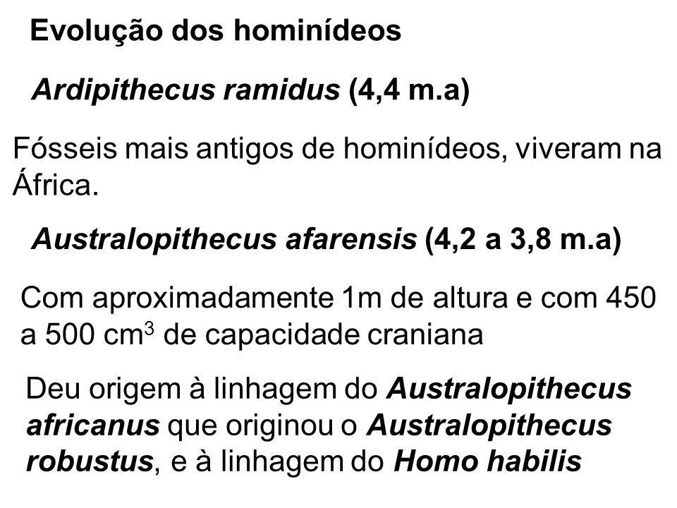 Homo habilis (2,4 a 1,8 m.a) Com volume craniano de 600 a 700cm 3, apresentava maior habilidade com as mãos, produzindo instrumentos de pedras lascadas Homo ergaster (2 m.a) Surgiu a partir do Homo habilis e teria se expandido para a Ásia, onde originou o Homo erectus