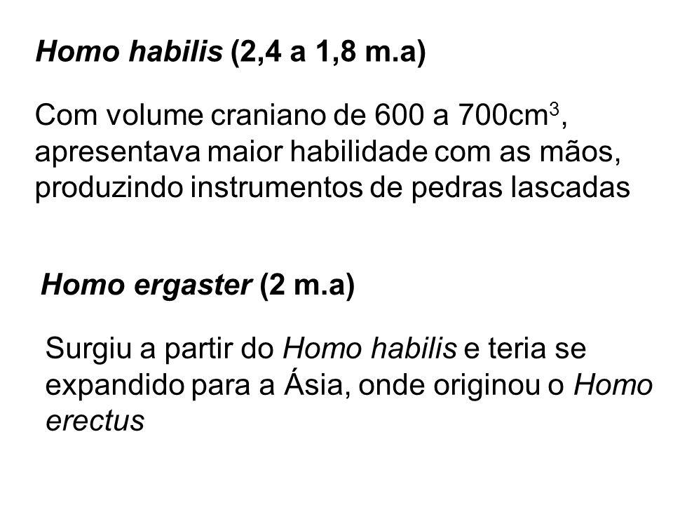 Homo erectus (1,5 m.a) Com capacidade craniana de 850 a 1000 cm 3, fabricavam objetos mais aperfeiçoados e começaram a utilizar o fogo Homo heidelbergensis (600 mil anos) Surgiram a partir Homo ergaster na África e migraram para a Europa onde deram origem aos neandertais