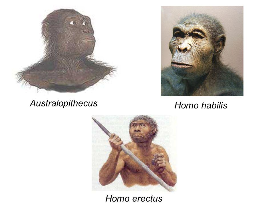 Homem de Neanderthal Viveram exclusivamente na Europa e Ásia entre 130 e 30 mil anos atrás, numa época em que o clima era muito frio Eram nômades, caçadores e formavam grupos.