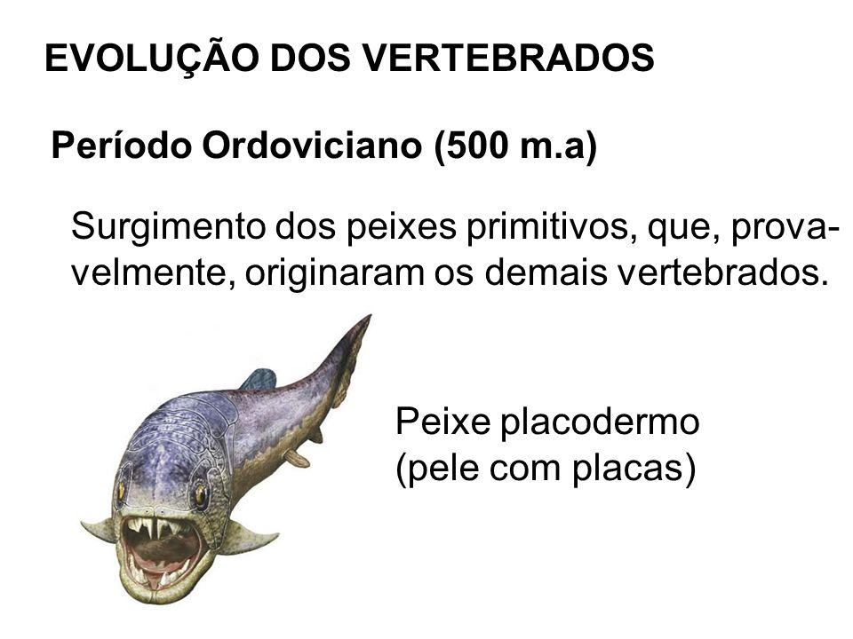 Final do Período Devoniano e início do Período Carbonífero (345 m.a) Surgimento dos primeiros anfíbios, provavel- mente, a partir de peixes com ossos nas na- dadeiras.