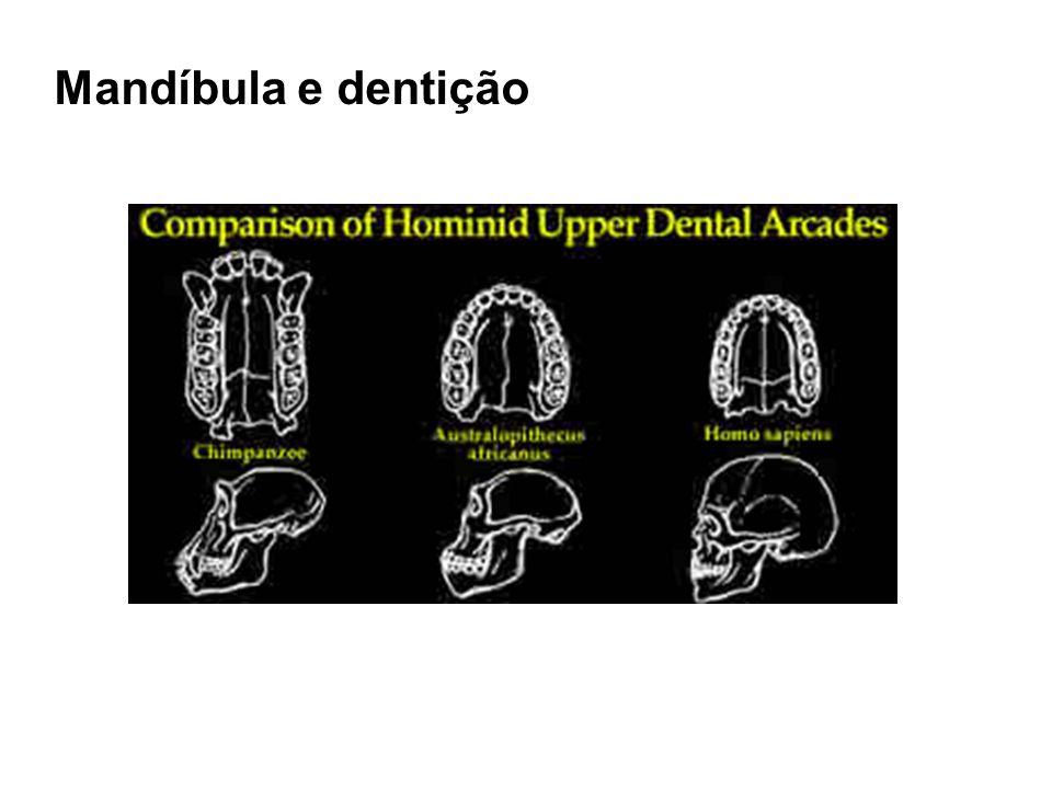 Garganta e posição da laringe
