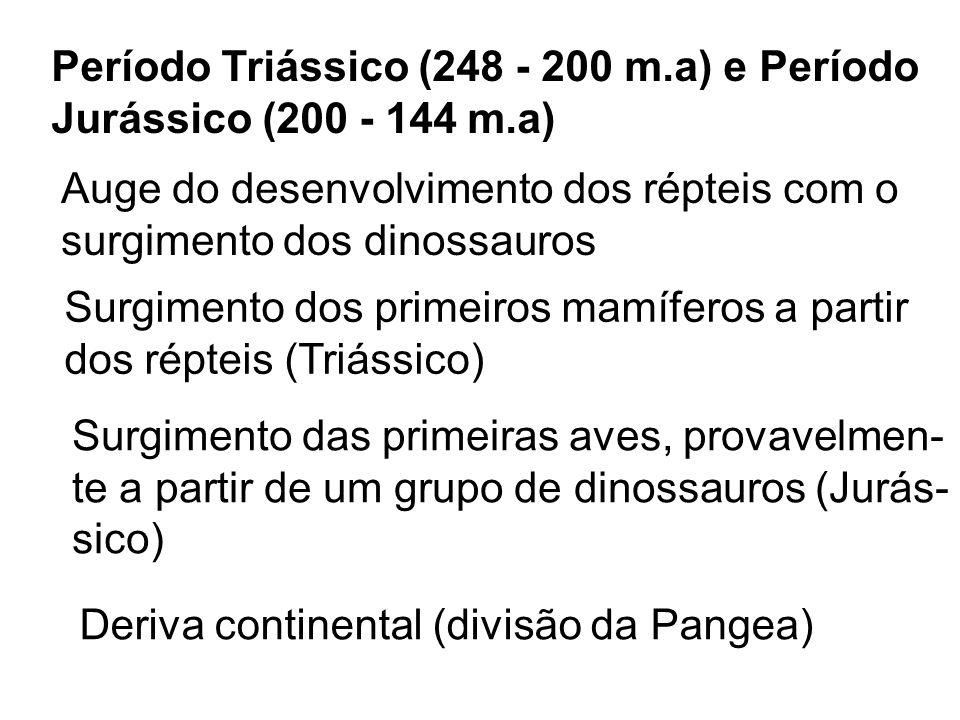 Período Triássico (248 - 200 m.a) e Período Jurássico (200 - 144 m.a) Auge do desenvolvimento dos répteis com o surgimento dos dinossauros Surgimento