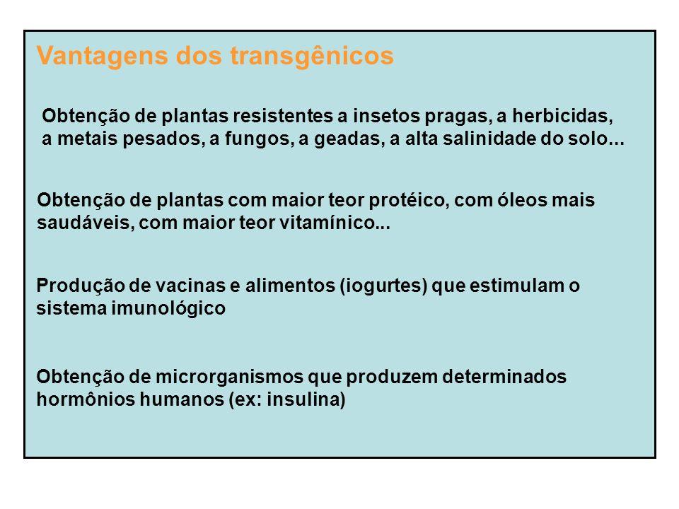 Vantagens dos transgênicos Obtenção de plantas resistentes a insetos pragas, a herbicidas, a metais pesados, a fungos, a geadas, a alta salinidade do solo...