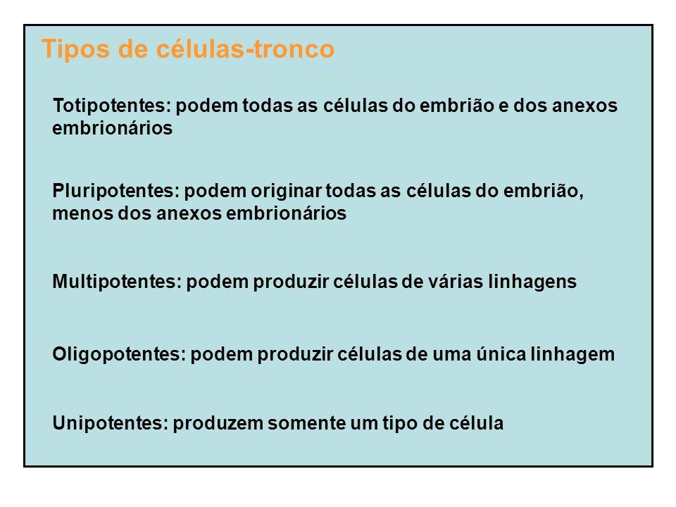 Tipos de células-tronco Totipotentes: podem todas as células do embrião e dos anexos embrionários Pluripotentes: podem originar todas as células do embrião, menos dos anexos embrionários Multipotentes: podem produzir células de várias linhagens Oligopotentes: podem produzir células de uma única linhagem Unipotentes: produzem somente um tipo de célula
