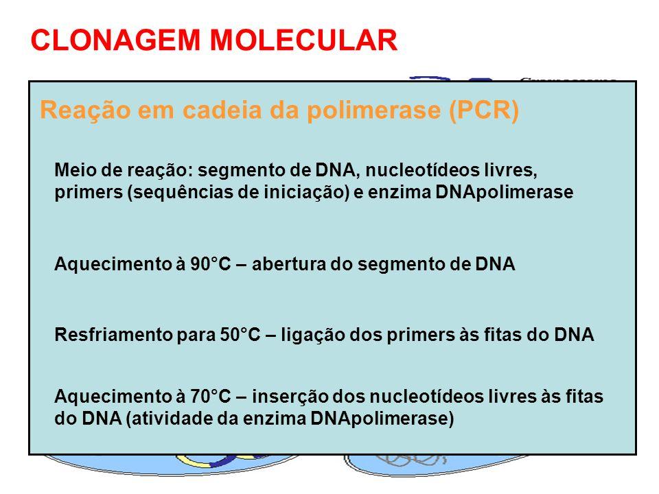 CLONAGEM MOLECULAR Utilização de plasmídios bacterianos Retirada do plasmídio da bactéria Abertura o plasmídio com enzimas de restrição Ligação do segmento de DNA ao plasmídio com enzimas ligases Devolução do plasmídio recombinado à bactéria Divisão da bactéria - duplicação do segmento de DNA introduzido Reação em cadeia da polimerase (PCR) Meio de reação: segmento de DNA, nucleotídeos livres, primers (sequências de iniciação) e enzima DNApolimerase Aquecimento à 90°C – abertura do segmento de DNA Resfriamento para 50°C – ligação dos primers às fitas do DNA Aquecimento à 70°C – inserção dos nucleotídeos livres às fitas do DNA (atividade da enzima DNApolimerase)