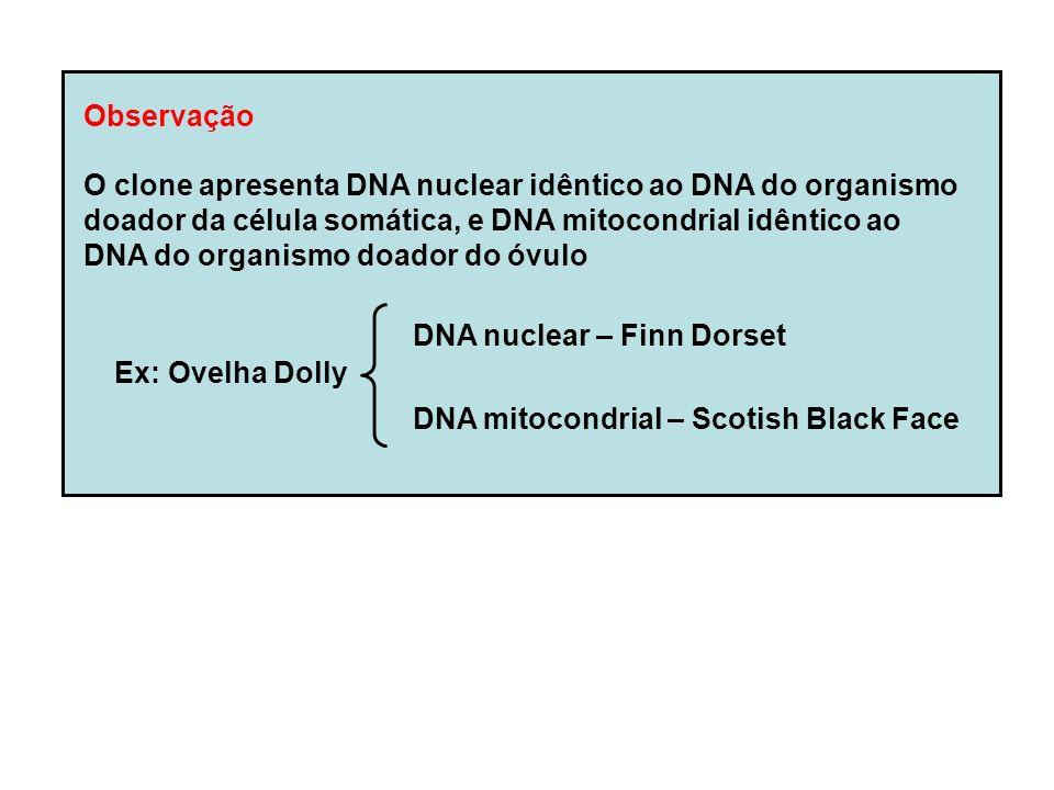 Observação O clone apresenta DNA nuclear idêntico ao DNA do organismo doador da célula somática, e DNA mitocondrial idêntico ao DNA do organismo doador do óvulo DNA nuclear – Finn Dorset DNA mitocondrial – Scotish Black Face Ex: Ovelha Dolly