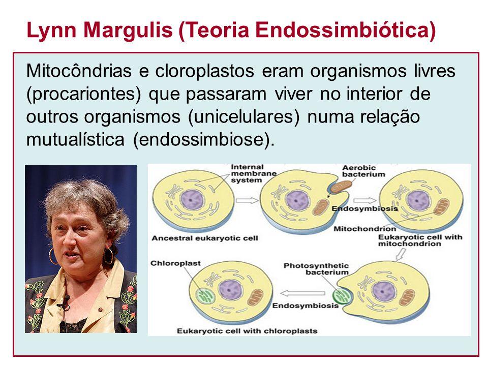 Mitocôndrias e cloroplastos eram organismos livres (procariontes) que passaram viver no interior de outros organismos (unicelulares) numa relação mutualística (endossimbiose).