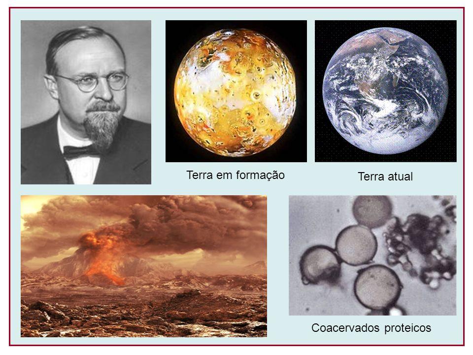 Stanley Miller (1953) Obtenção de substâncias orgânicas a partir dos elementos da atmosfera primitiva Deposição de compostos orgânicos