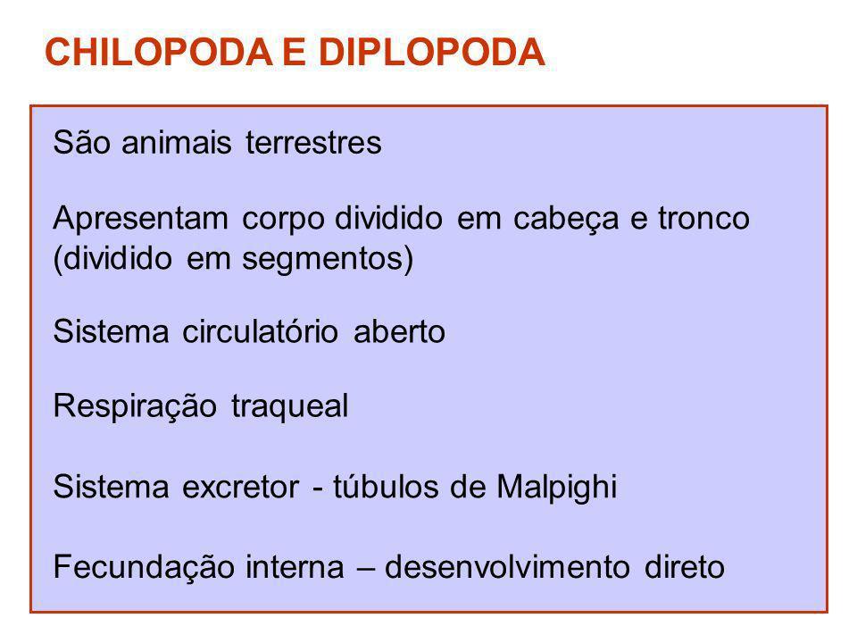 CHILOPODA E DIPLOPODA São animais terrestres Apresentam corpo dividido em cabeça e tronco (dividido em segmentos) Sistema circulatório aberto Respiraç