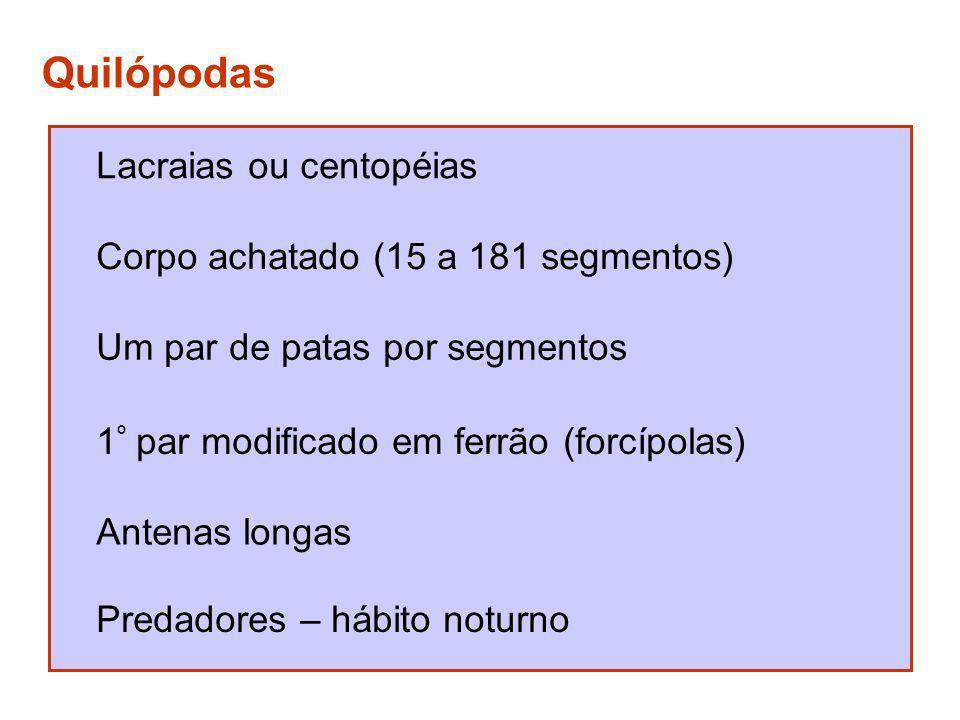 Quilópodas Lacraias ou centopéias Corpo achatado (15 a 181 segmentos) Um par de patas por segmentos 1 º par modificado em ferrão (forcípolas) Antenas