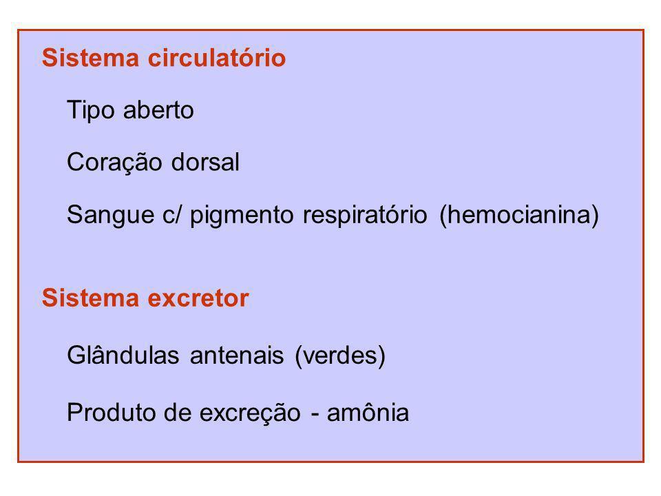 Sistema circulatório Tipo aberto Coração dorsal Sangue c/ pigmento respiratório (hemocianina) Sistema excretor Glândulas antenais (verdes) Produto de