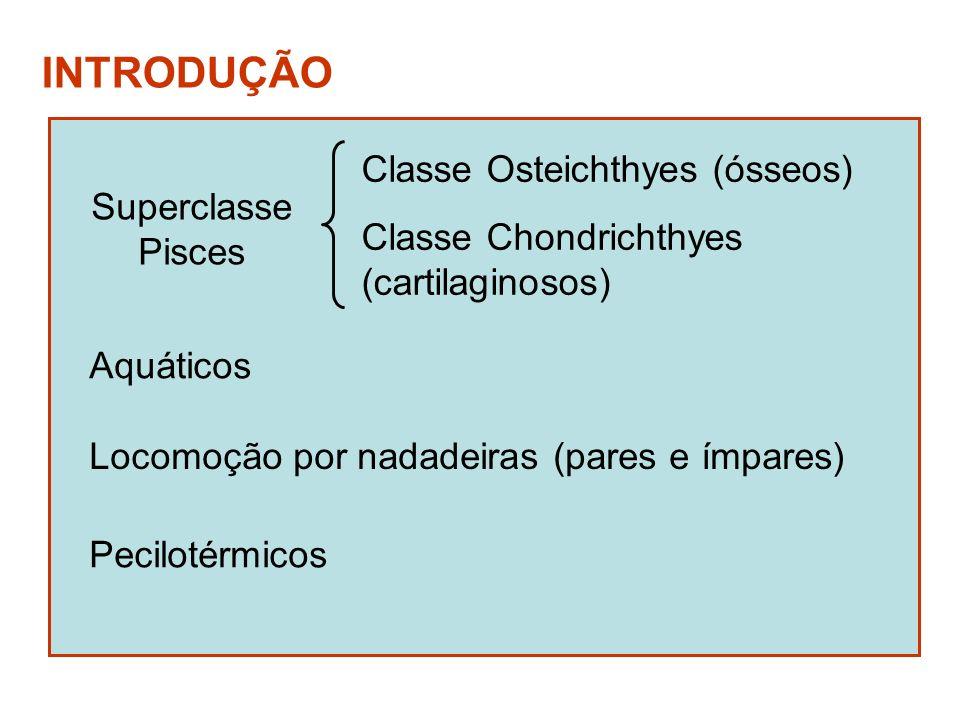 Superclasse Pisces INTRODUÇÃO Aquáticos Locomoção por nadadeiras (pares e ímpares) Pecilotérmicos Classe Osteichthyes (ósseos) Classe Chondrichthyes (