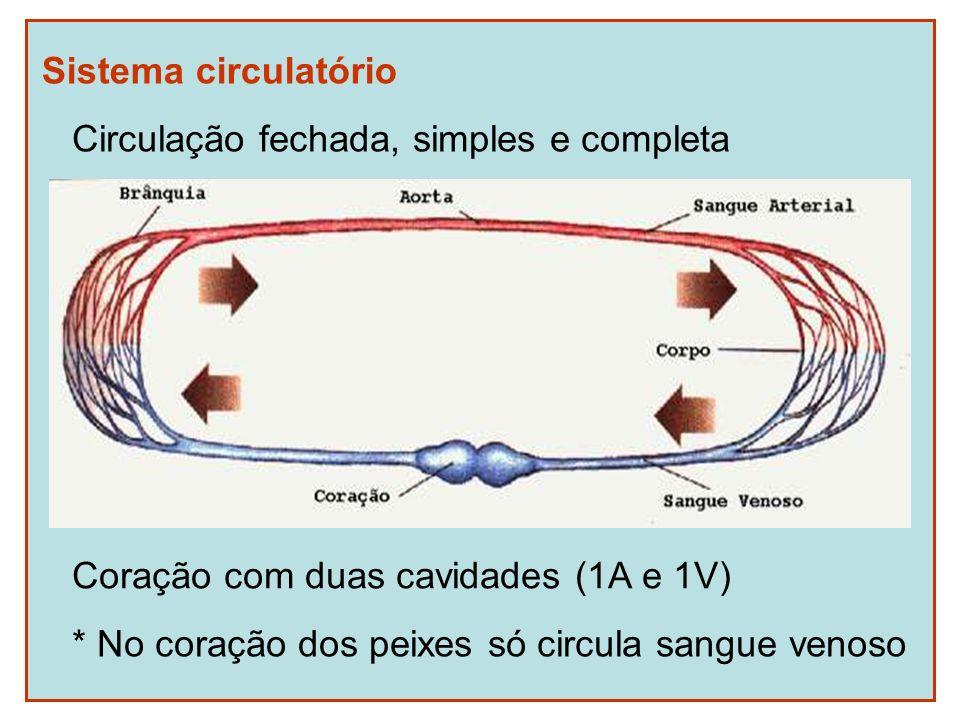 Sistema circulatório Coração com duas cavidades (1A e 1V) * No coração dos peixes só circula sangue venoso Circulação fechada, simples e completa