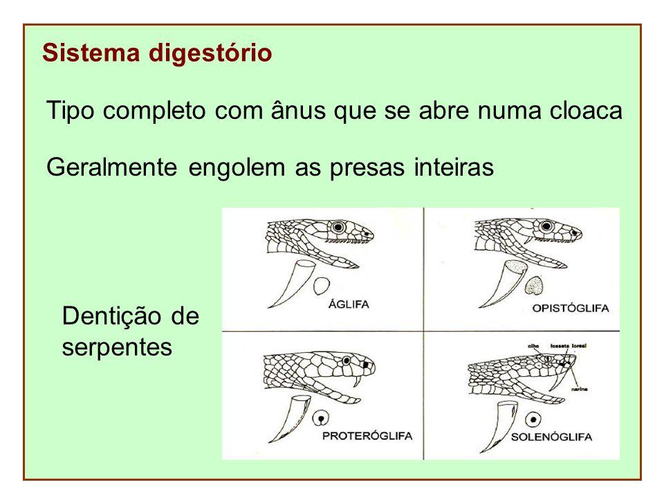 Sistema digestório Tipo completo com ânus que se abre numa cloaca Geralmente engolem as presas inteiras Dentição de serpentes