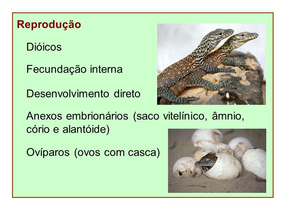 Reprodução Dióicos Desenvolvimento direto Anexos embrionários (saco vitelínico, âmnio, cório e alantóide) Ovíparos (ovos com casca) Fecundação interna