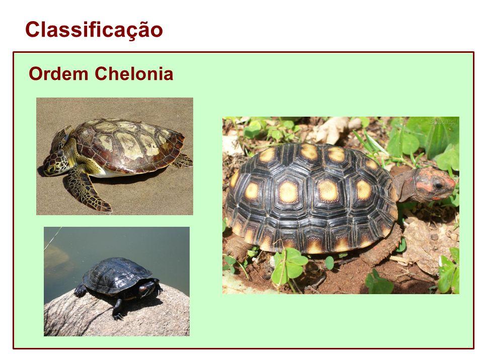 Classificação Ordem Chelonia