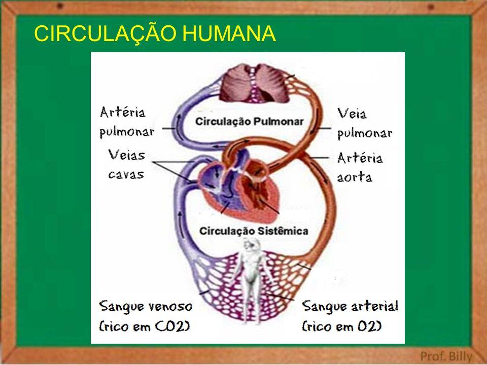 CIRCULAÇÃO HUMANA